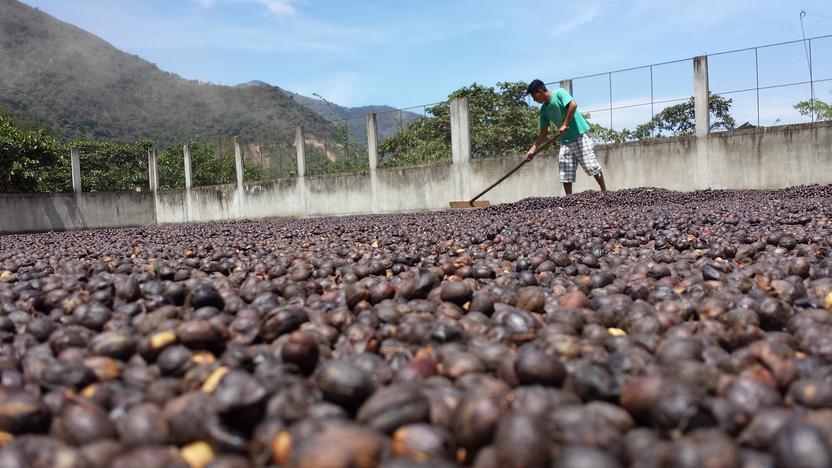 Сушка кофе на патио